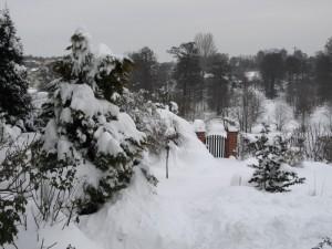 Widok na wyjście z ogrodu