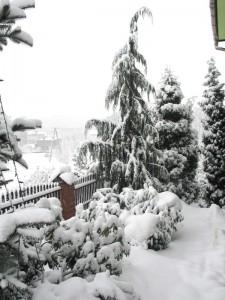 Północna część ogrodu w zimie