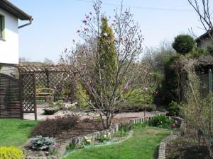 """Magnolia""""Betty""""-27kwiecień"""
