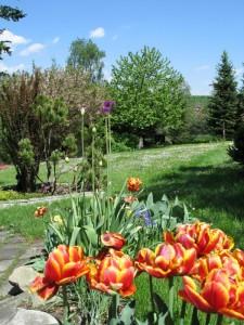 Wiosenna rabatka z roślin cebulowych