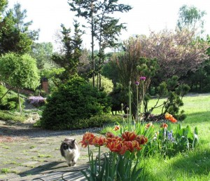 Wiosenna minirabatka z tulipanami