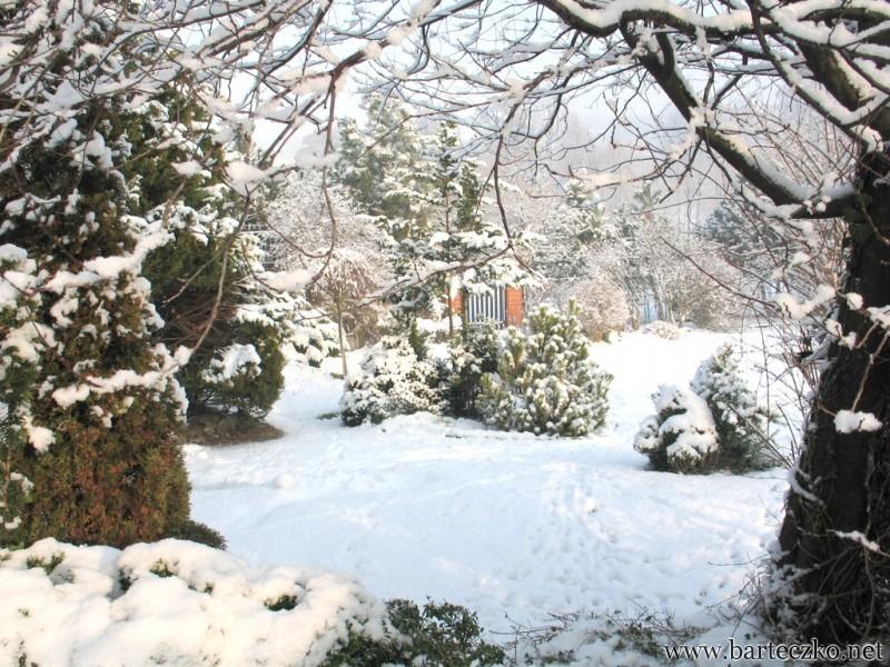 Zimowy krajobraz z wiewiórką