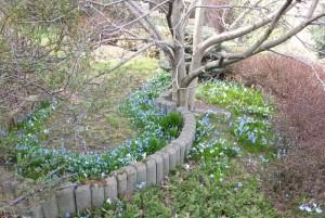 Roślinki cebulowe pod magnolią