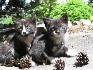 Małe kotki dwa