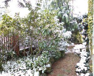 polnocna-sciezka-w-zimie